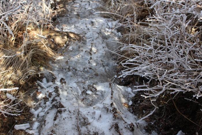 道 凍ってる