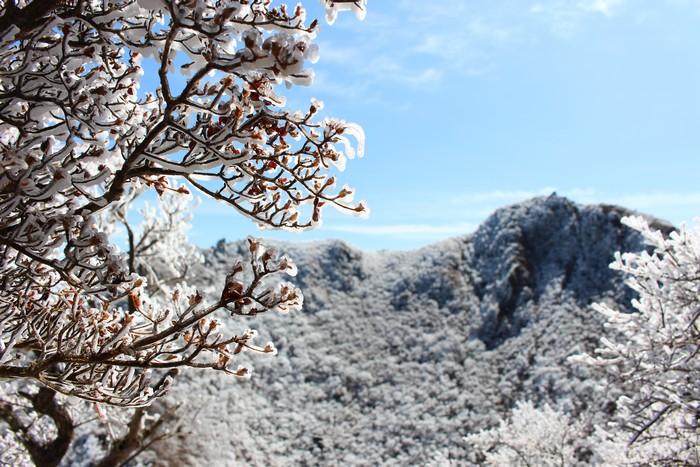 東峰 樹氷