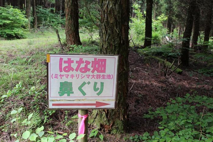 御花畑 登山道