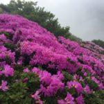 【ミヤマキリシマ】平治岳に行ってきた!登山ルートは男池から時間は約2時間