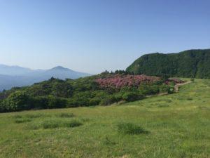 ミヤマキリシマ群生地