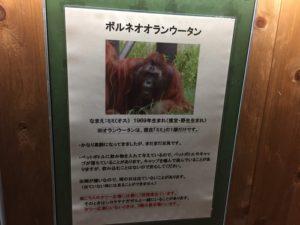 夜の動物園