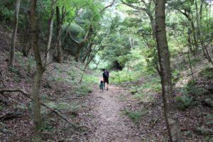 九大の森 遊歩道