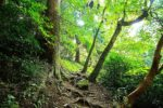 【子連れ登山】3歳の息子と「若杉山」に登ってきた。「奥の院」からだと楽勝☆