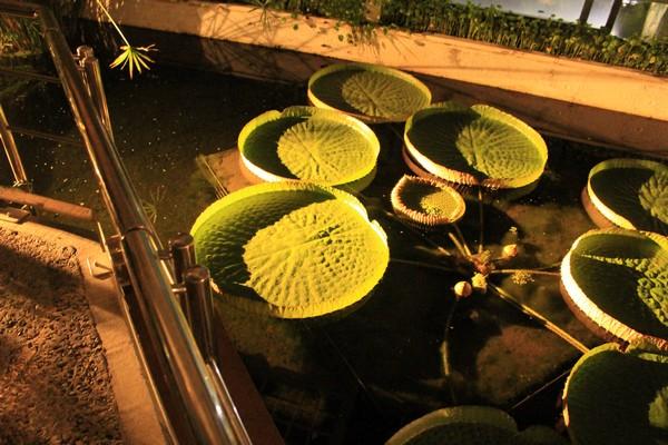 デカい植物