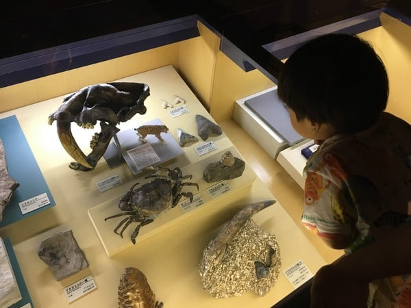 博物館 展示