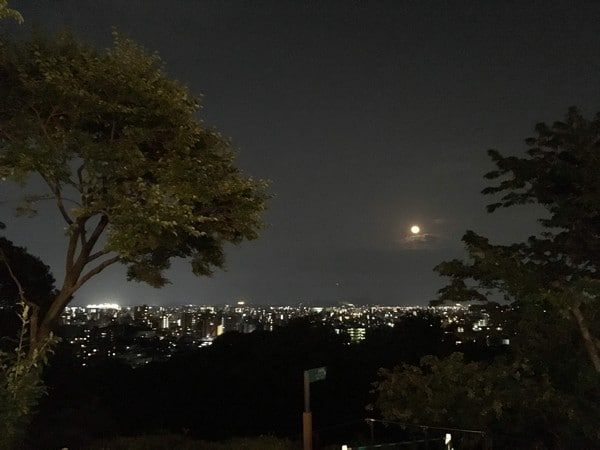 夜の植物園 夜景