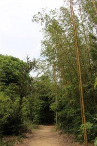 九大の森 真竹