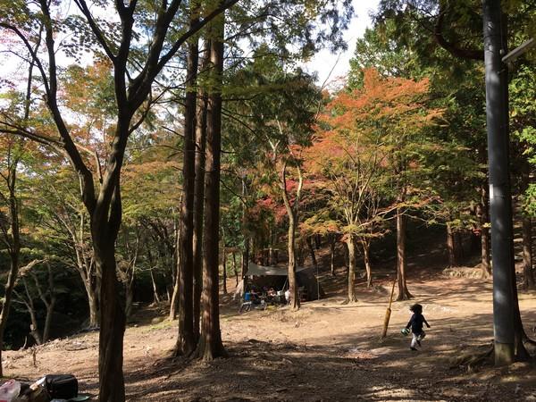 昭和の森 キャンプ場