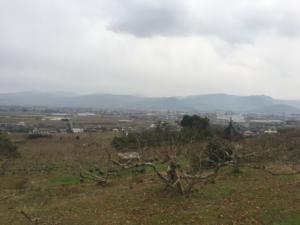 吉井百年公園 景色